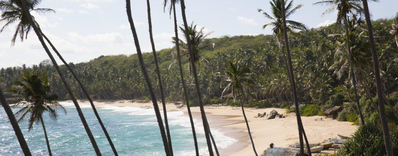 Voyage de Luxe Sri Lanka