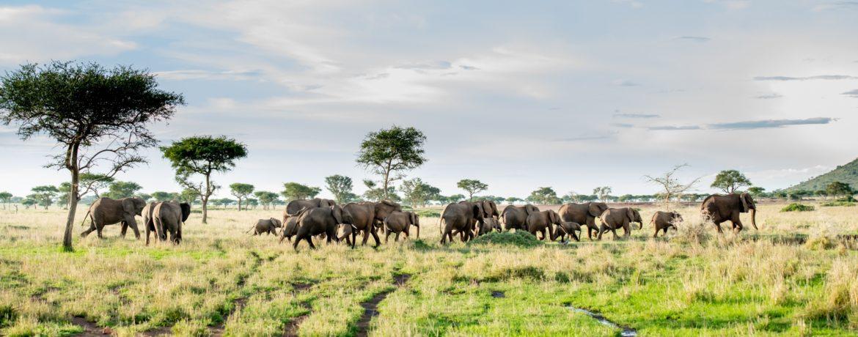 Safari de luxe Tanzanie