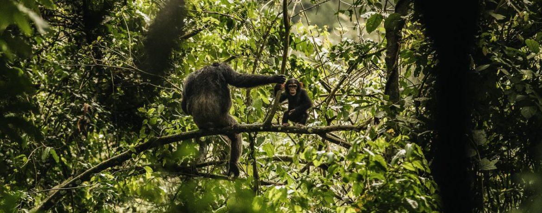 voyage de luxe Rwanda