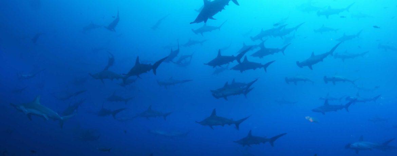 plongée galapagos
