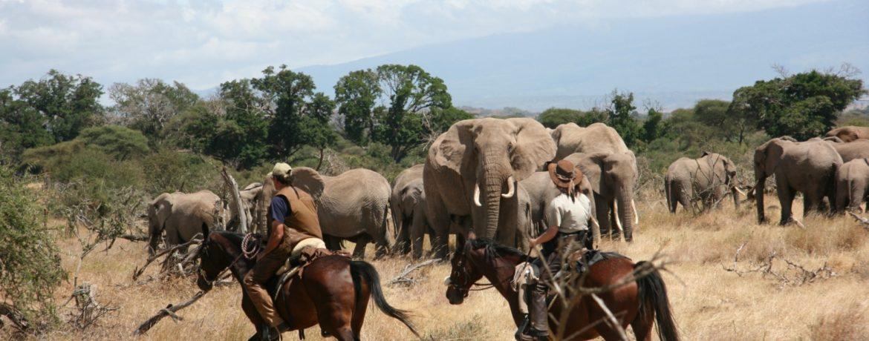 agence de voyage de luxe en tanzanie